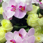 Kruisvorm-Orchidee2