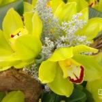 Nr.10-Cymbidium(Orchidee)3