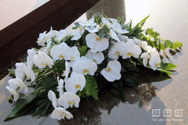Nr13-witte-phalaenopsis