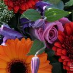 Rouwstuk-Nr27-arrangement-bonte-kleuren2